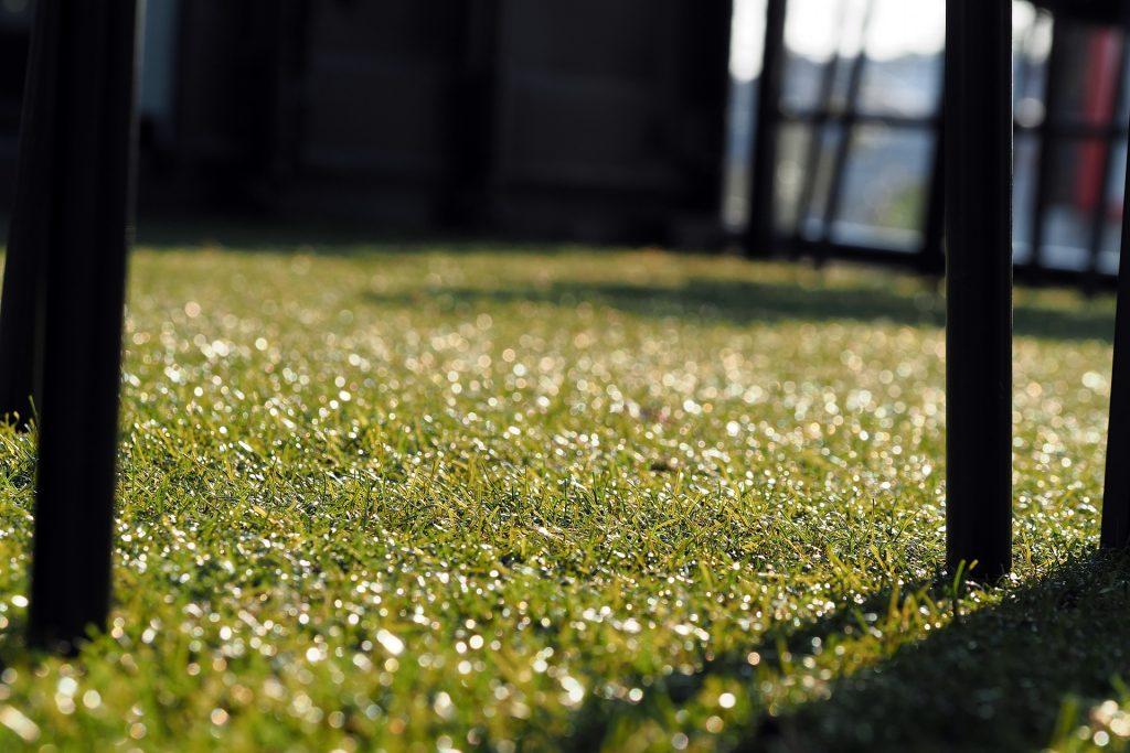 Artificial Grass - why should you choose artificial grass for your garden?