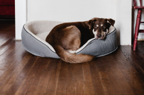 What's the best flooring type for you if you're a pet owner?
